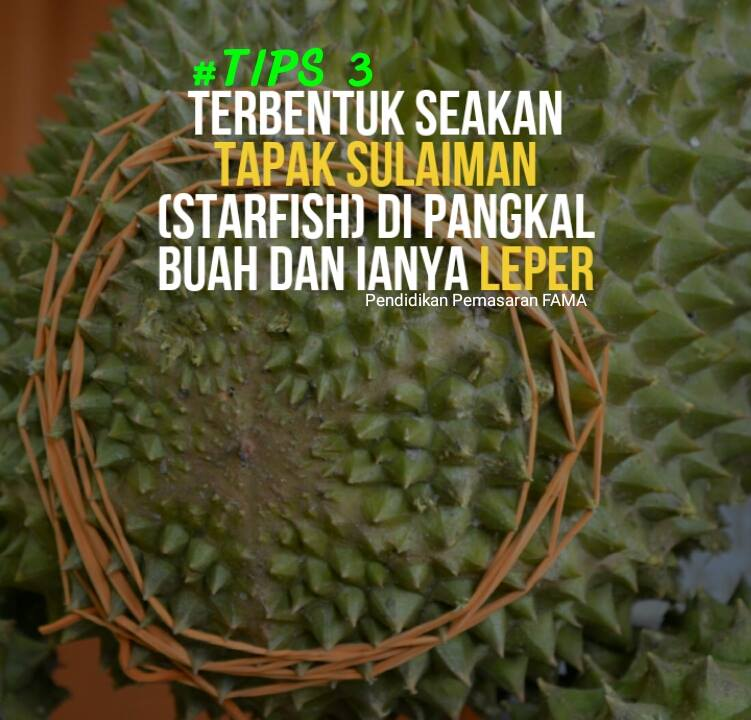 Tips 3 Mengenal Durian Musang King