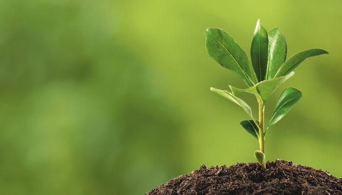 Kinh nghiệm chăm sóc cây sau khi trồng