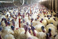 FG alerts public on outbreak of birdflu in 7 states, FCT