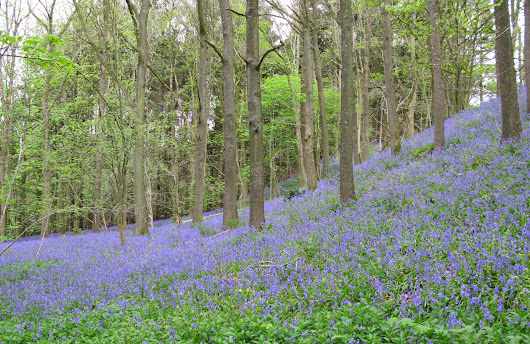 Stridd Woods And Upper Wharfedale.....05.05.2014.