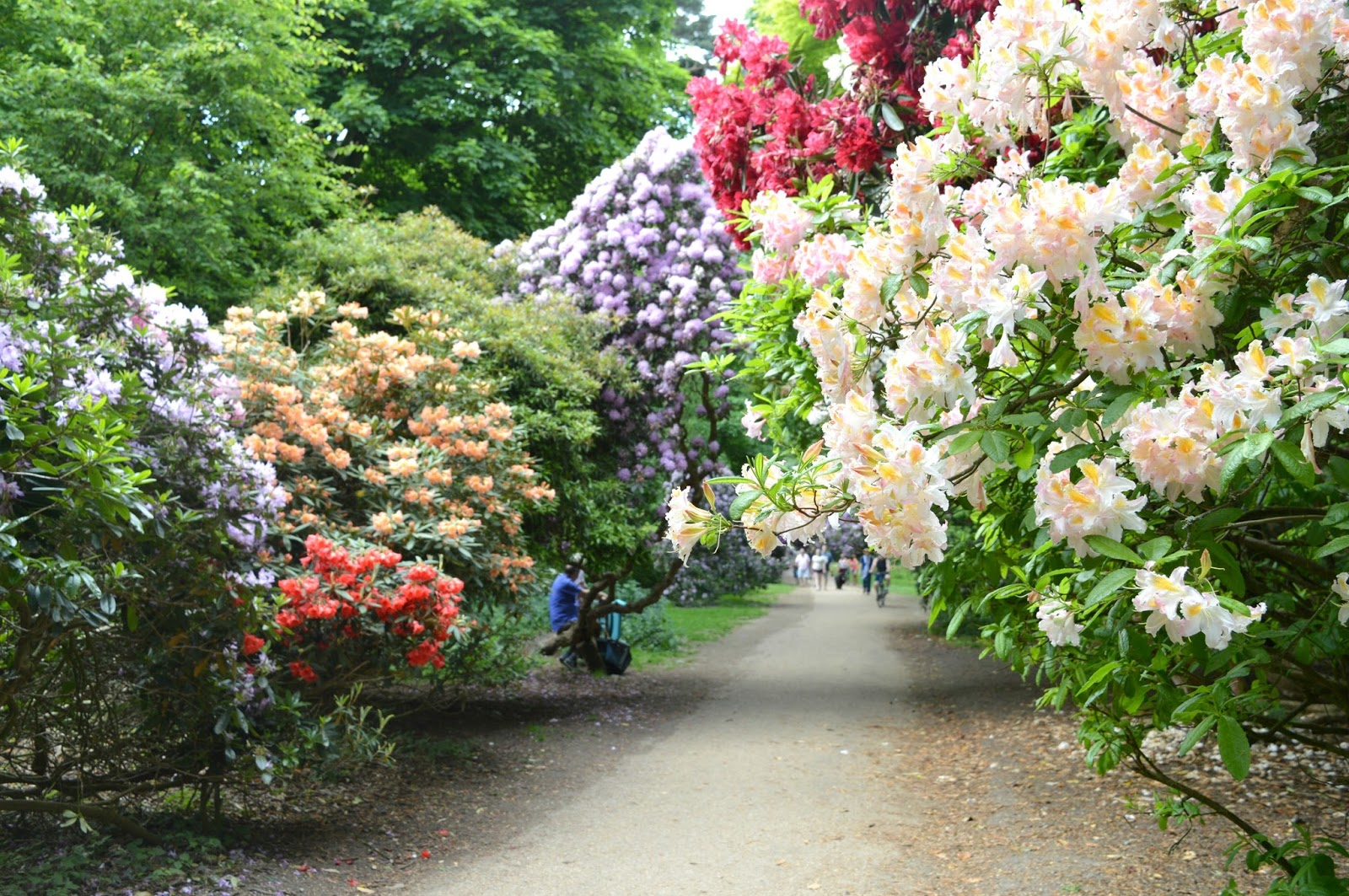 A Bank Holiday Weekend in Norfolk - Sheringham Park