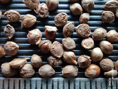 Close-up photo of Kodo Millet grains.
