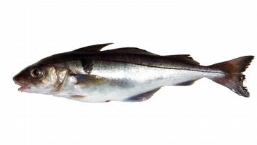 lage fiskekaker av hyse