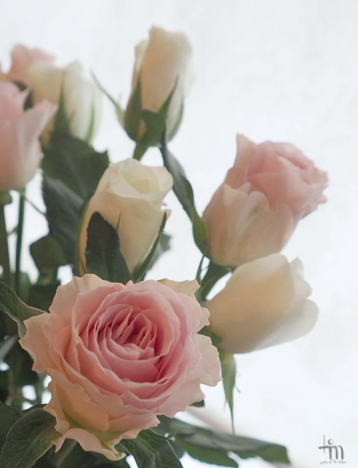 valkoiset ja vaaleanpunaiset ruusut