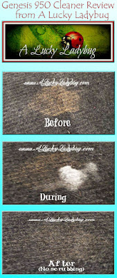 Best Pet Stain Remover For Carpet Stains