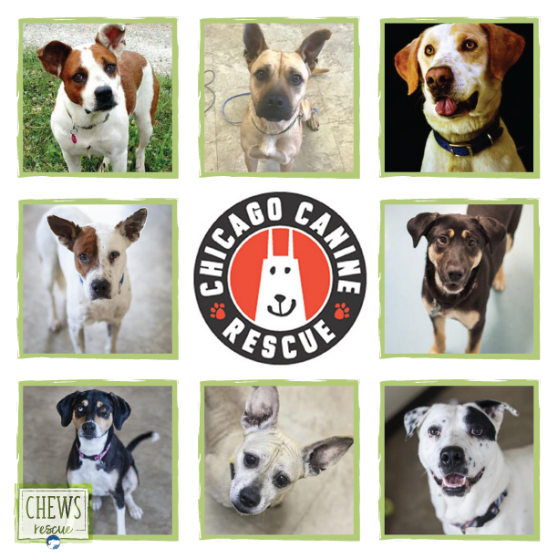 Barkworthies is covering the adoption fees for Chicago Canine Rescue in support Adopt a Shelter Pet DAy