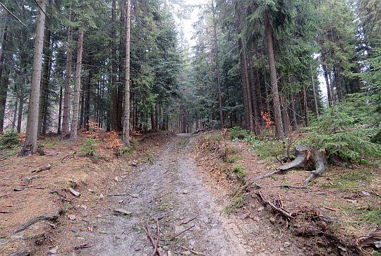 Leśny stok.