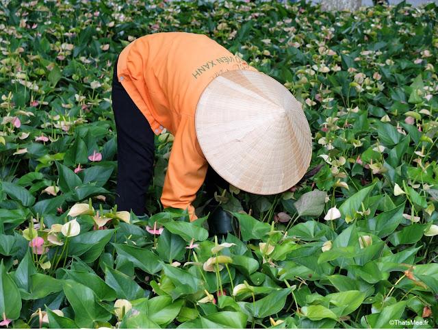 jardinier chapeau conique hanoi vietnam