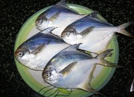 Efficacy And Benefits of Pomfret Fish for Pregnant Women