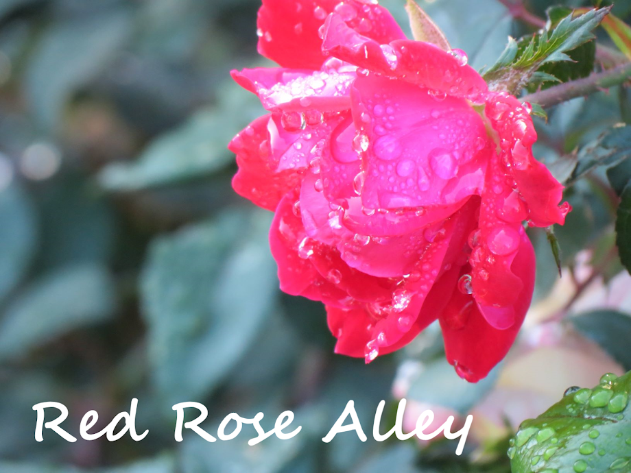 Red Rose Alley