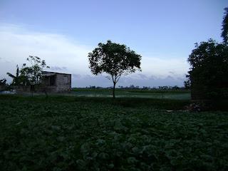 Đồng ruộng Hưng Yên