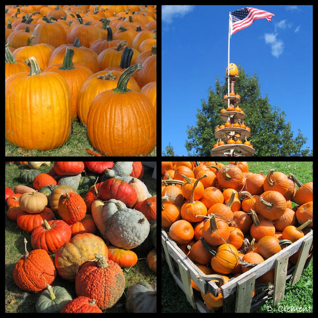 A Visit to the Pumpkin Patch in Photographs via RainbowsWithinReach