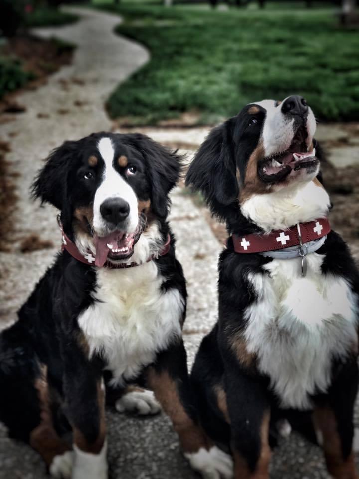 Colorado Ers Dog Friendly