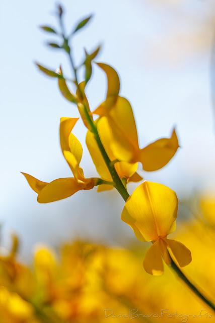 Fotografía de una flor amarilla con el fondo amarillo de otras flores