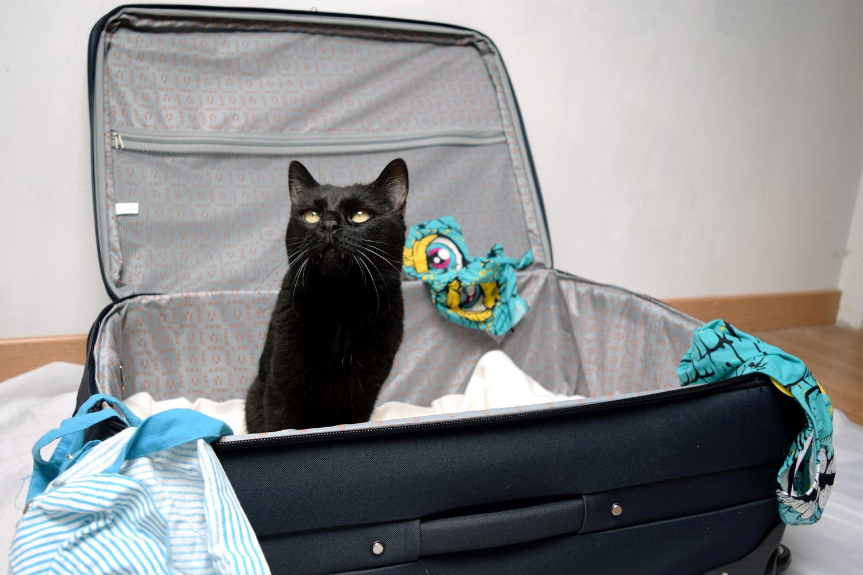 Check-list pour les vancances d'été, liste imprimable pour ne rien oublier au moment de préparer ses valises