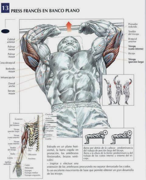 ejercicios maternity triceps shady deal barra z