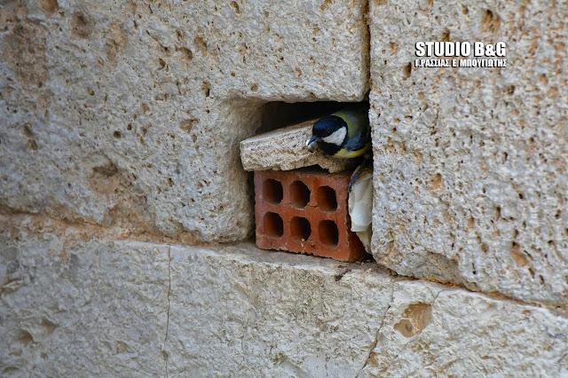 Η φωτογραφια της ημέρας: Ένας καλογεράκος στον παλιό Μεντρεσέ του Ναυπλίου