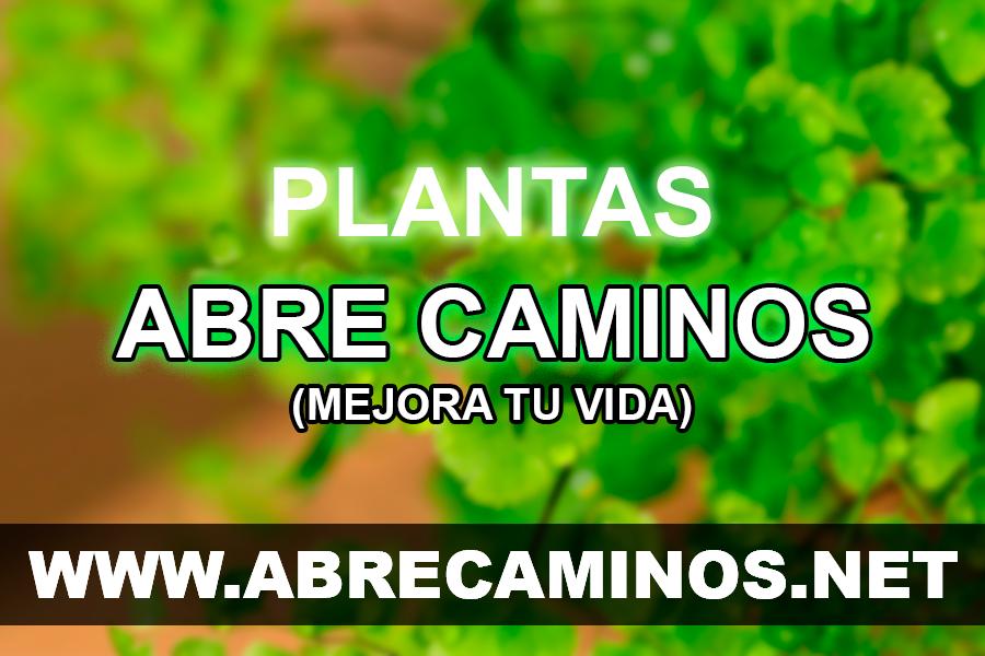 Plantas Abre Caminos