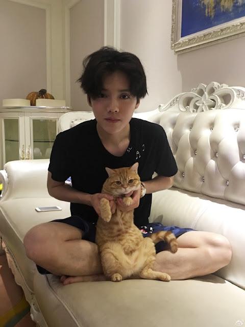 Luhan cat