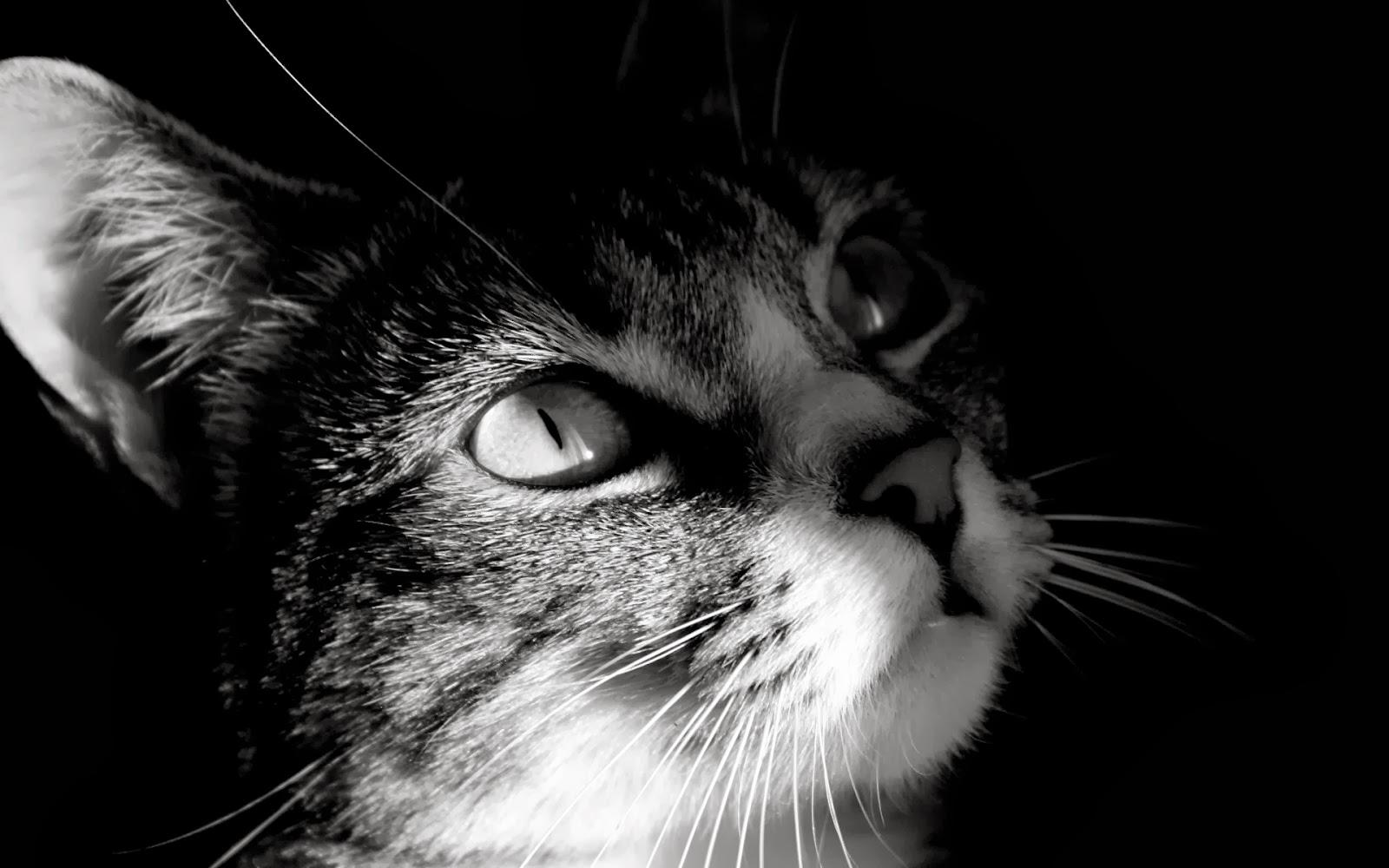 100 [ Gambar Kartun Animasi Kucing ]