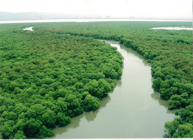 "Inorbit Mall, malad to host ""Mangrove Matters"" – the first ever Marathon run to protect the Mangroves"