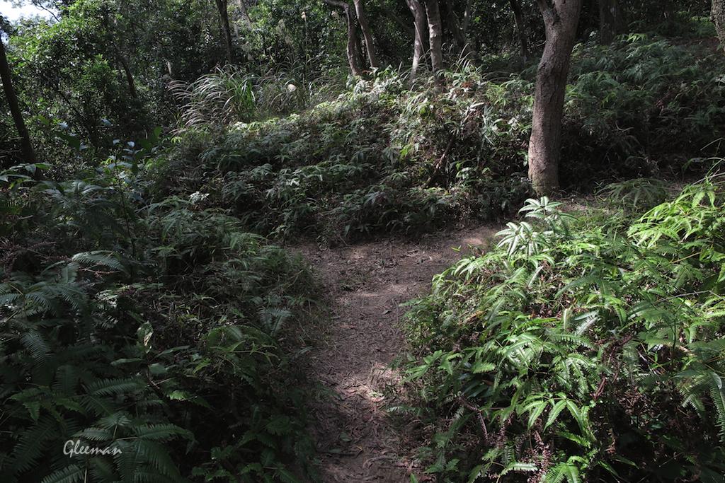 第二個岔路,取右徑(保持在山稜線上)。