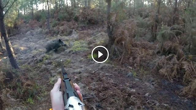 collection des meilleurs moments de chasse aux sangliers
