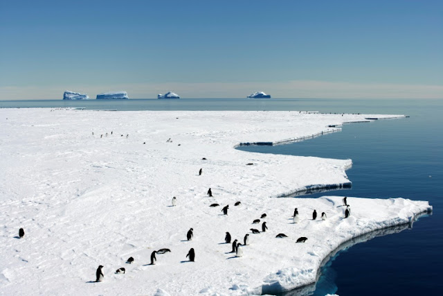 giant new marine sanctuary in Antarctica