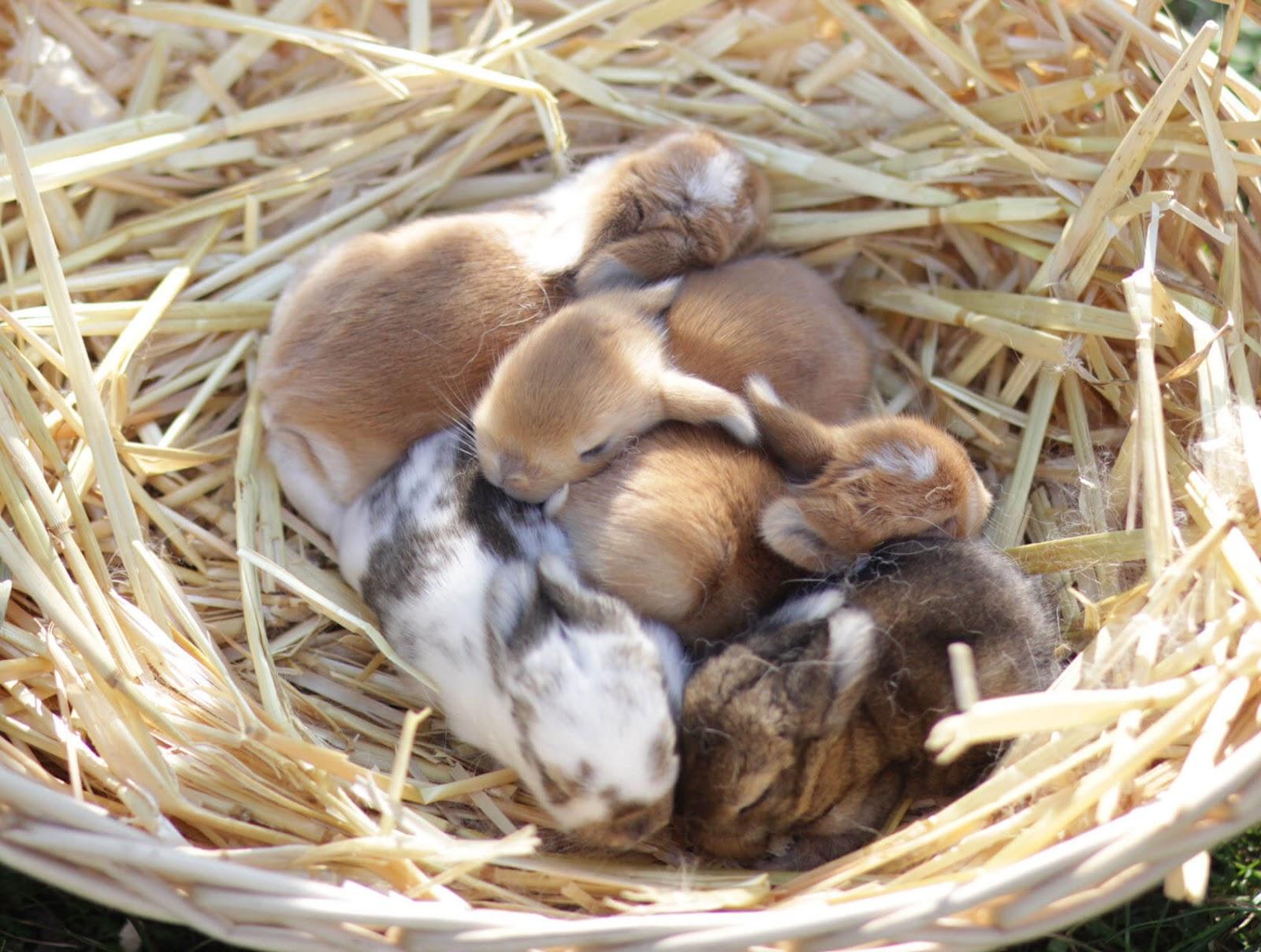 kaninchen perfect impfung beim kaninchen fr ein langes. Black Bedroom Furniture Sets. Home Design Ideas