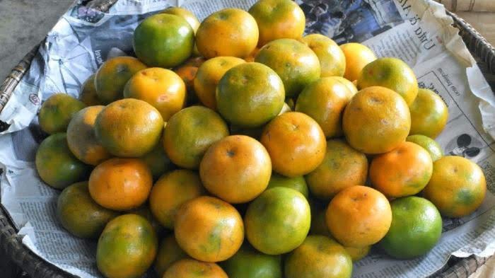 Sejuta Manfaat konsumsi buah jeruk bagi kesehatan