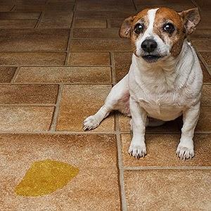 Treinamento do Arrombamento para seu pet