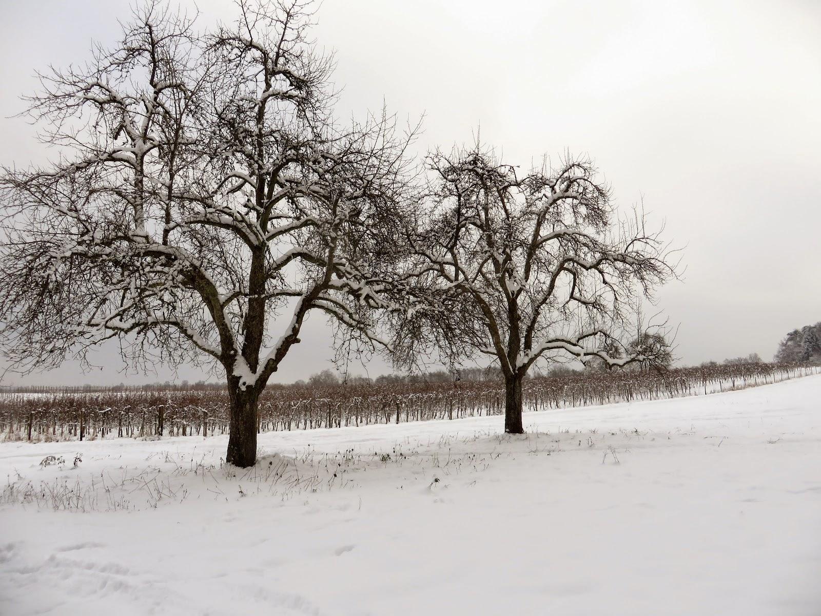 Bodenseewellen Winternacht