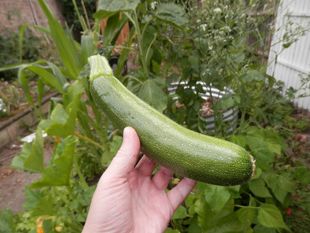 My homegrown harvest, July 2017.  From UK garden blogger secondhandsusie.blogspot.com #gardening #gardenblogger #permaculturegarden #suburbanpermaculture #harvest