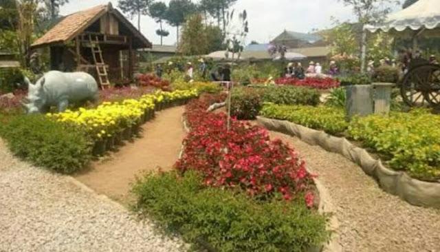 Wisata Taman Bunga Begonia Lembang Bandung Wisata Taman Bunga Begonia - Taman Bunga di Lembang Bandung