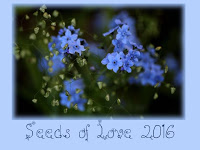 """Seeds of Love"" 2016"