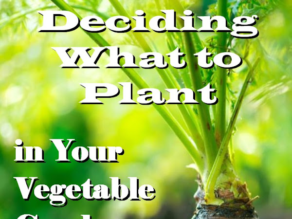 Deciding What to Plant in Your Vegetable Garden