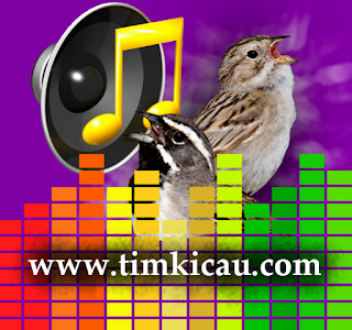 4 Audio Suara Burung Sparrow Untuk Masteran