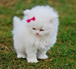 اجمل صور قطط اليفة منزلية Pictures of Cats صور قطط جديدة - قطط - صور قطط روعه -قطط قطط, الصور الطبيعية ,  أجمل القطط - قطط صغيره - قطط اليفه - قطط ظريفه - قطط ناعمه - قطط وديعه - صور قطط جميلة، صور قطط كيوت جداً، اجمل صور قطط غالية، احلى صور قطط فى الكون، اجدد صور قطط حلوين، صور قطط رومانسية، صور قطط هادئة، صور قطط كبيرة،  اجمل , حيوانات صور قطط  ، اجمل صور القطط  ، صور حيوانات اليفة .