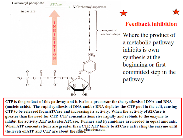 Enzyme Catalysis,Regulation of Enzymatic Activity,