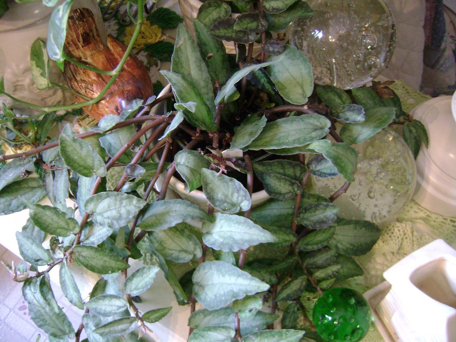 Houseplant Guru: Pets and Our Plants