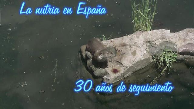 La nutria en España, 30 años de seguimiento