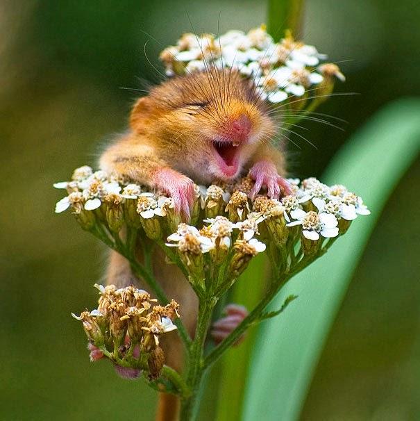 happy animals photos