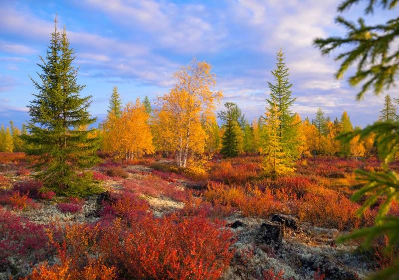 Adjacent zones between taiga and tundra