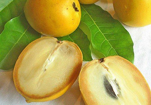 Manfaat Buah Abiu Bagi Kesehatan Tubuh, khasiat dari buah abui untuk tubuh