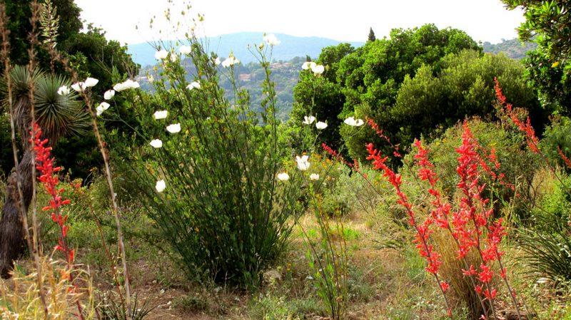 El chaparral. Jardín de California. Jardin plantas clima mediterráneo (Domaine du Rayol) diseño: Gilles Clement