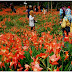 Taman Bunga Amarilis Patuk : Suguhkan Pesona Kesejukan Mata