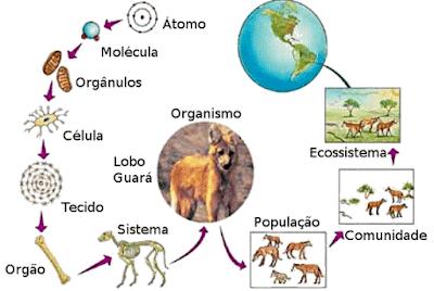 De que são feitos os seres vivos?