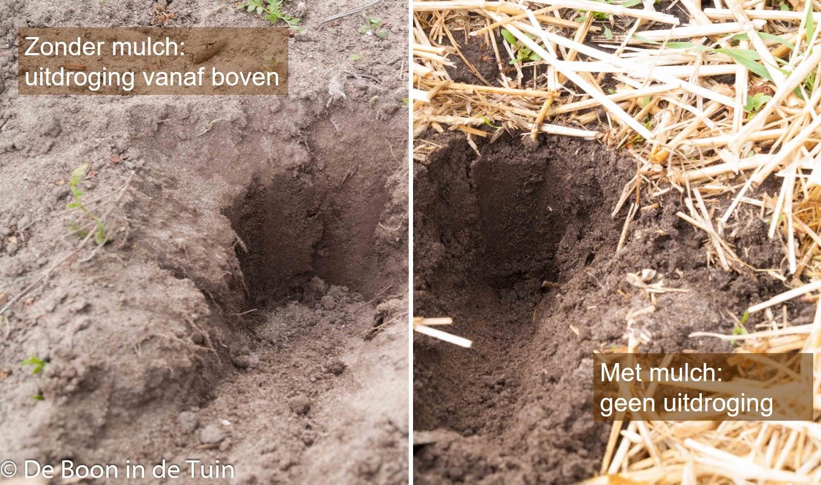 mulchen moestuin bodem grond vocht verdamping