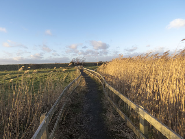 Boardwalk surrounded by reeds at the Wexford Wildfowl Reserve