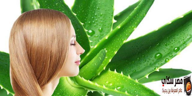 علاج سقوط الشعر والاستفادة من طب الاعشاب Hair loss